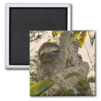 sloth square magnet