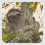 Sloth Square Sticker