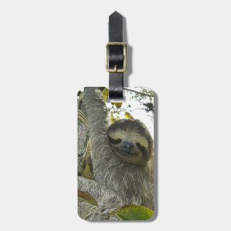 Sloth Up A Tree Luggage Tag