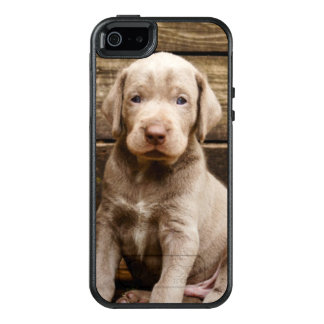 Slovakian Rough Haired Pointer Puppies OtterBox iPhone 5/5s/SE Case