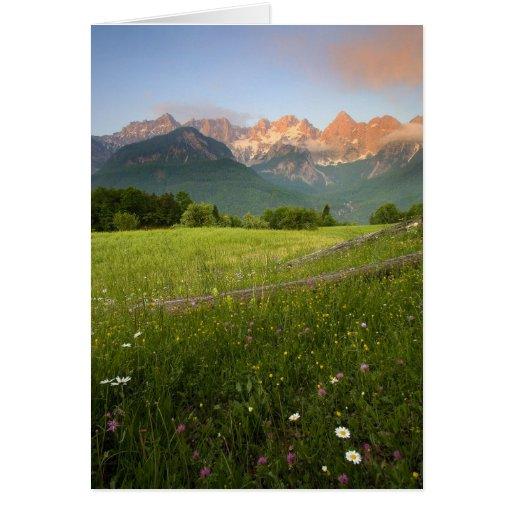 Slovenia Meadow Cards
