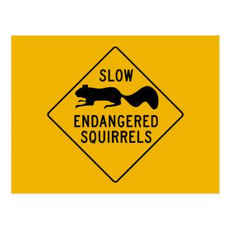Slow Endangered Squirrels, Warning Sign, Maryland Postcard
