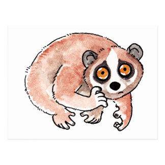 Slow Loris Postcard