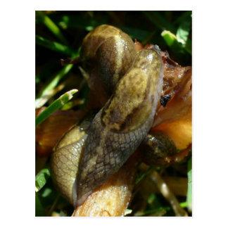 Slugs, Unalaska Island Postcard