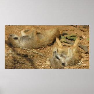 Slumbering Meerkats poster
