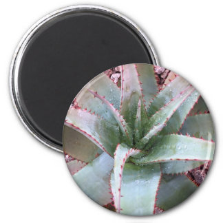 Small agave magnet