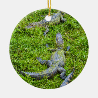 Small Alligators Basking Christmas Ornament