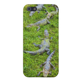 Small Alligators Basking iPhone 5 Cover
