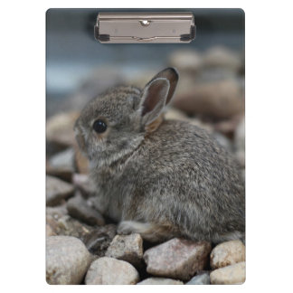 SMALL BABY BUNNY CLIPBOARD