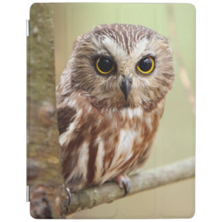 Small Baby Owl | Ontarios iPad Cover