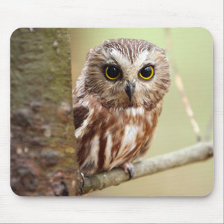 Small Baby Owl (Ontarios) Mouse Pad