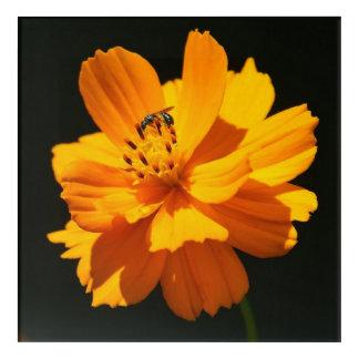 Small Bee, Acrylic Print. Acrylic Print