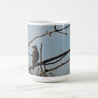 Small Bird on Tree Limb in Winter Basic White Mug