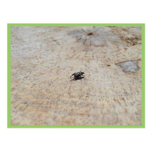 Small Black Beatle On Tree Stump Postcards