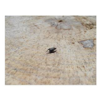 Small Black Beatle On Tree Stump Post Card
