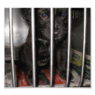 Small Black Puppy in a Kennel Photo Print