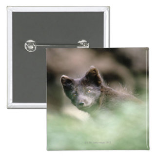 Small Black Wolf 15 Cm Square Badge