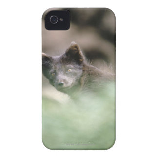 Small Black Wolf iPhone 4 Cover