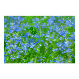 SMALL BLUE FLOWERS POSTER