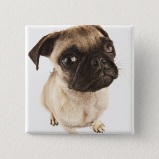 Small breed of dog with short muzzled face 15 cm square badge