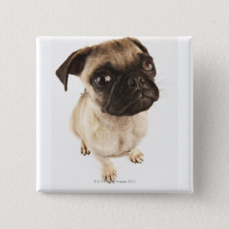 Small breed of dog with short muzzled face. 15 cm square badge