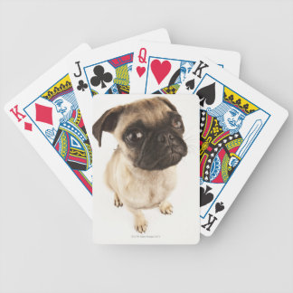 Small breed of dog with short muzzled face bicycle playing cards