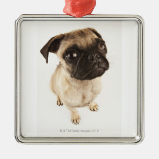 Small breed of dog with short muzzled face. christmas ornament