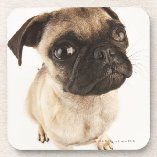 Small breed of dog with short muzzled face. coaster