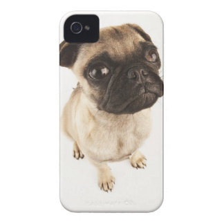 Small breed of dog with short muzzled face iPhone 4 Case-Mate case