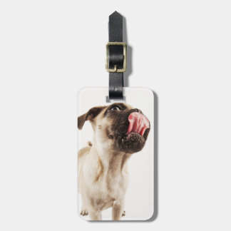 Small Breed of Dog with Short Muzzled Face Luggage Tag