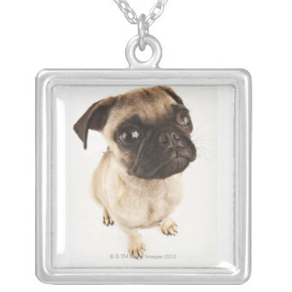 Small breed of dog with short muzzled face. square pendant necklace