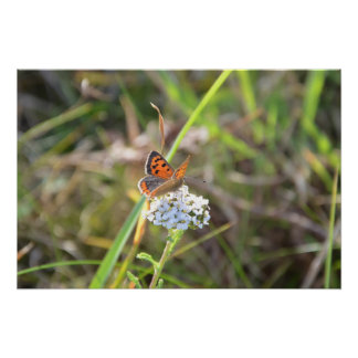 Small Copper Butterfly Print