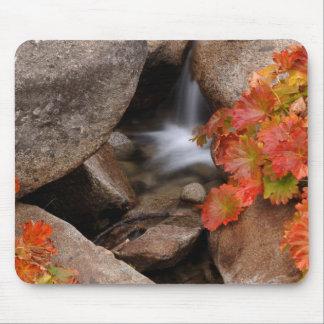 Small creek in autumn, California Mouse Mat