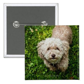 Small dog looking up at camera 15 cm square badge