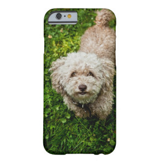 Small dog looking up at camera barely there iPhone 6 case