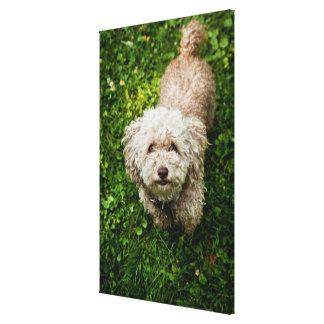 Small dog looking up at camera canvas print