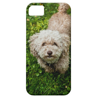 Small dog looking up at camera iPhone 5 cases