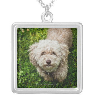 Small dog looking up at camera silver plated necklace
