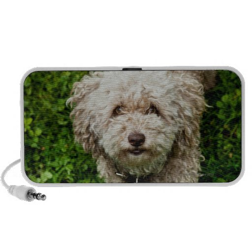 Small dog looking up at camera portable speakers