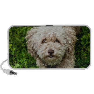 Small dog looking up at camera travelling speakers