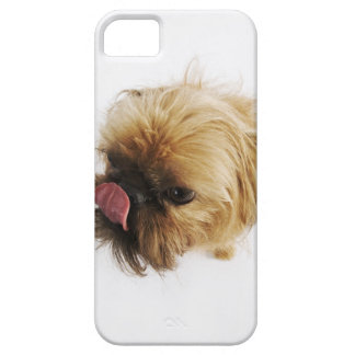 Small dog on white background, high angle view case for the iPhone 5