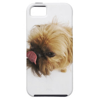 Small dog on white background, high angle view iPhone 5 cover
