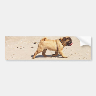 small dog pug baby playing in the summer bumper sticker