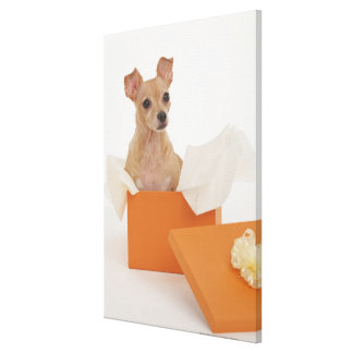 Small dog sitting in gift box canvas print
