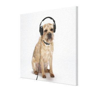 Small dog wearing headphones canvas print