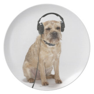 Small dog wearing headphones plates