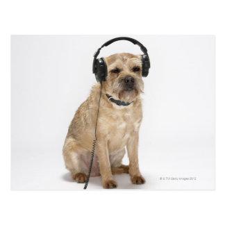 Small dog wearing headphones postcard