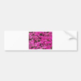 Small Field Of Dark Pink Flowers Car Bumper Sticker