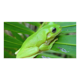 Small Green Frog Custom Photo Card