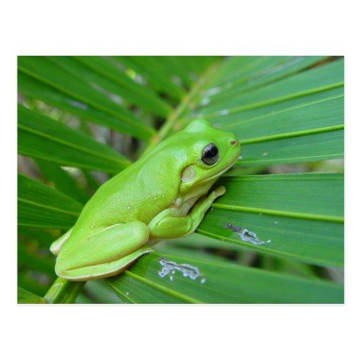 Small Green Frog Postcard